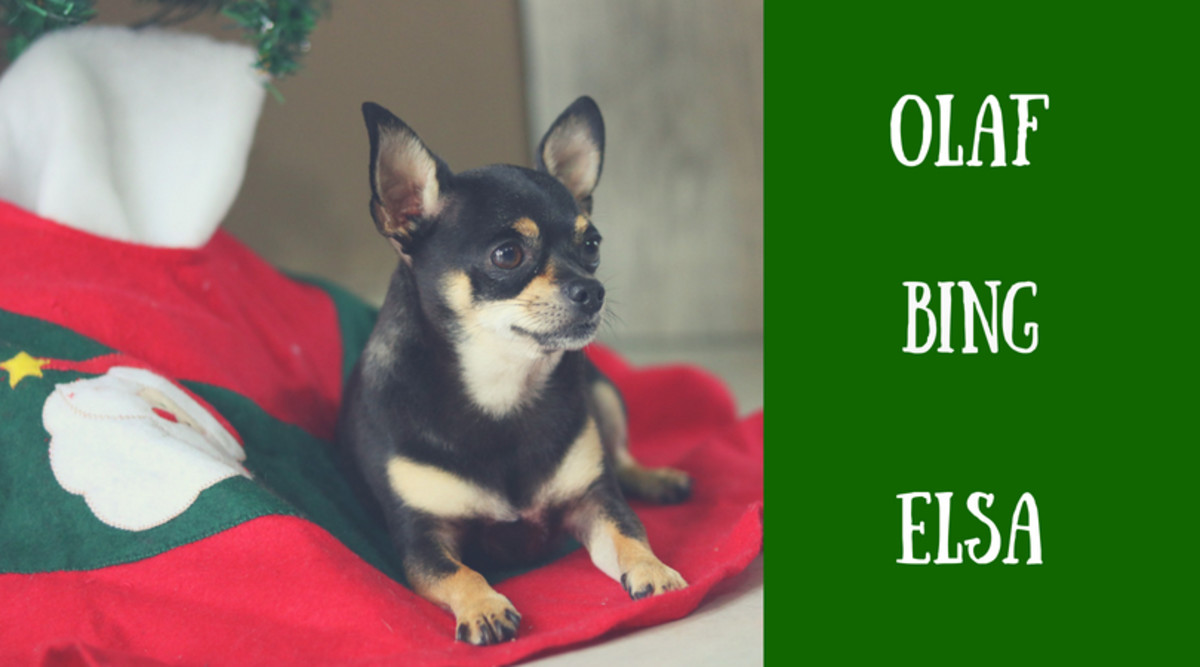 christmas names from tv and the movies - Christmas Pet Names
