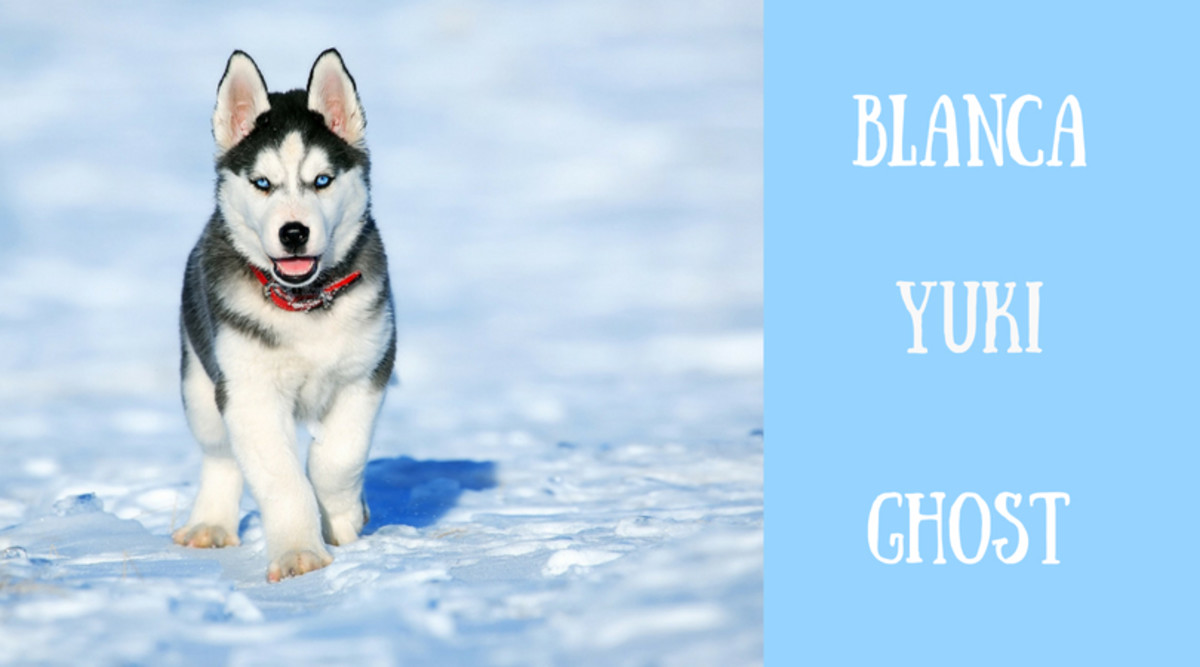 Christmas and Winter Names for Dogs