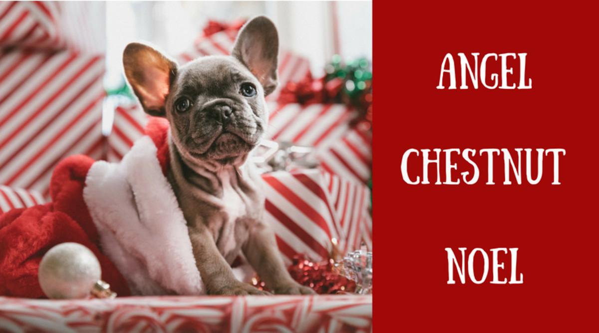 christmas dog names - Christmas Pet Names