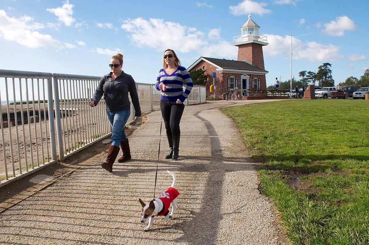 A synthetic, retractable and extendable dog leash is a popular choice for many dog owners