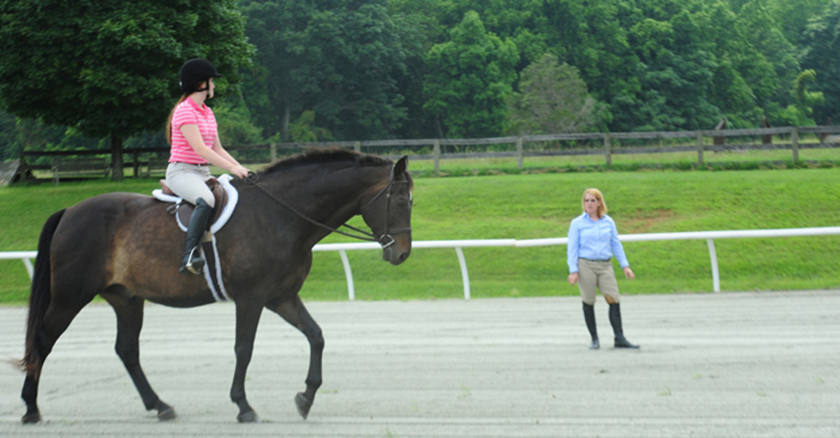 Many college equine programs seek horses of all levels for their programs.