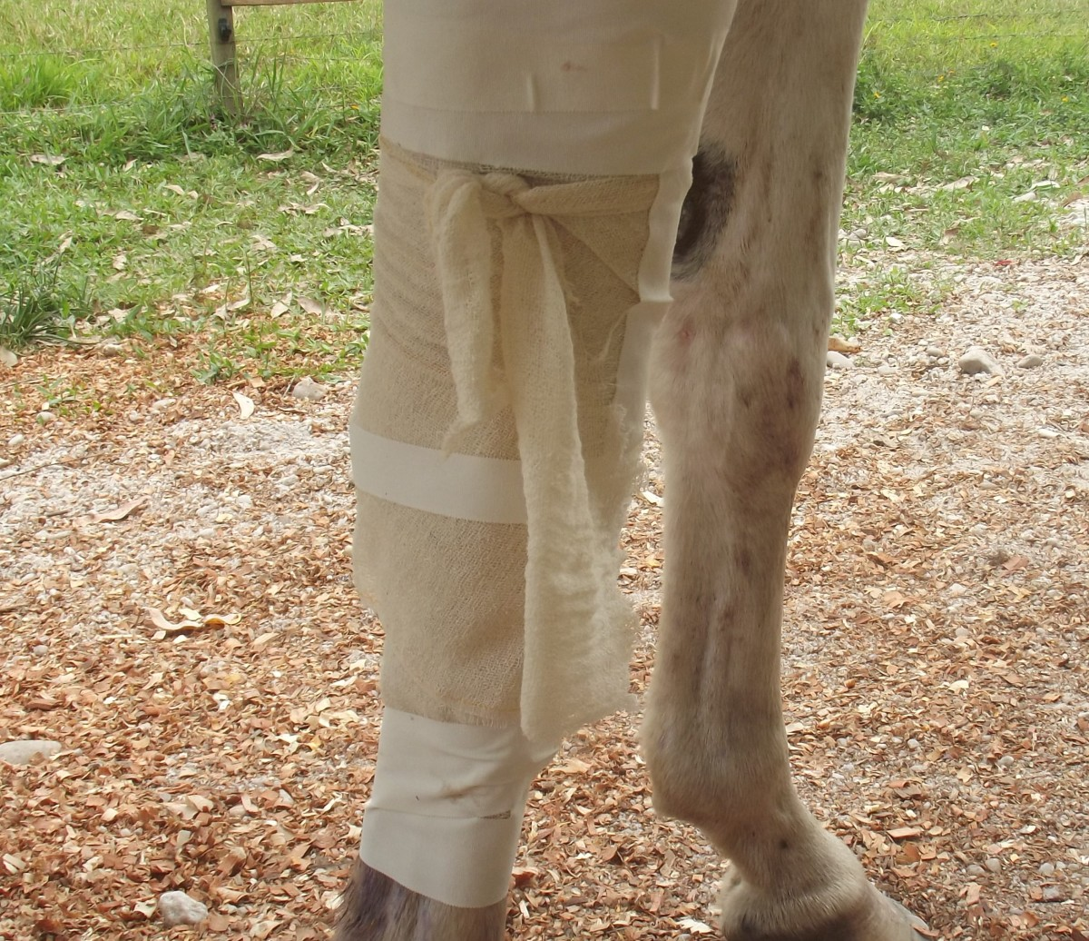 An inexpensive bandage using roll gauze and medical tape.