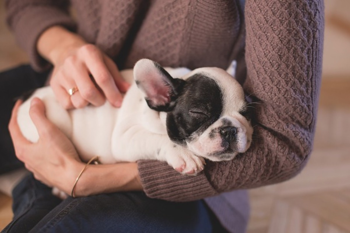 All dogs love being petted and stroked. When you're petting your dog, it's also an opportunity to check for any signs of ill-health, especially in the skin and coat. If his skin is flaky, sore, or dry, and if his fur lacks shine, take him to the vet