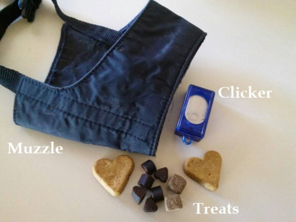 Items needed to train your dog to wear a muzzle.