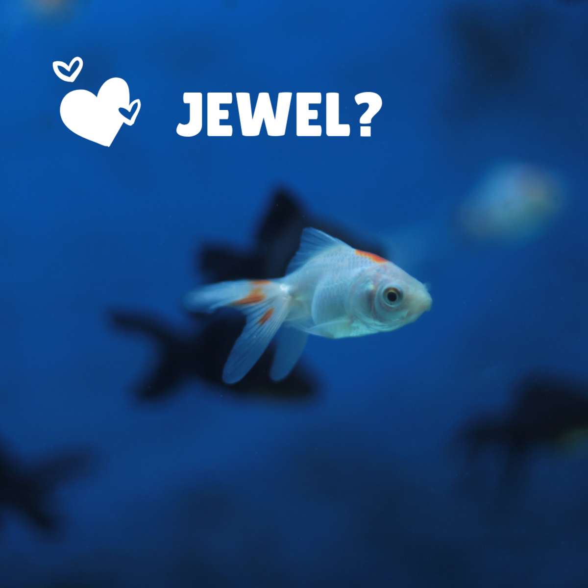 Is your white goldfish a Jewel?
