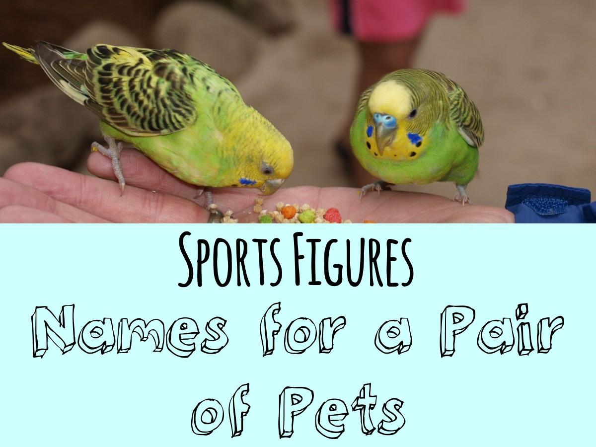 names-for-pairs-of-pets