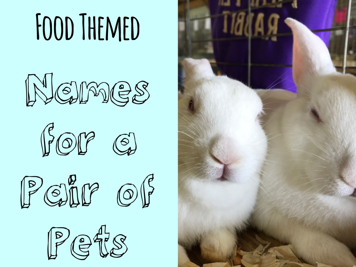 500+ Cute and Clever Names for Pairs of Pets | PetHelpful
