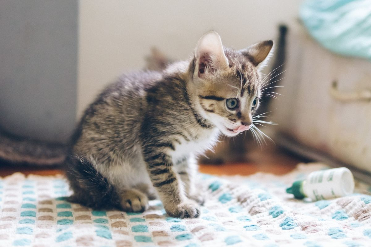 Your vet or a shelter vet may prescribe antibiotics depending on the severity.