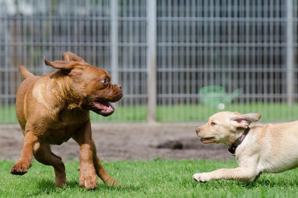 """This smaller pup is """"coming back for more."""""""