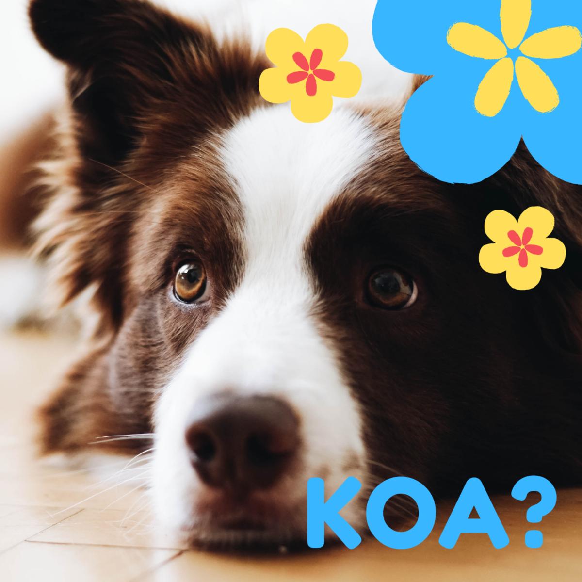 Is he a Koa?