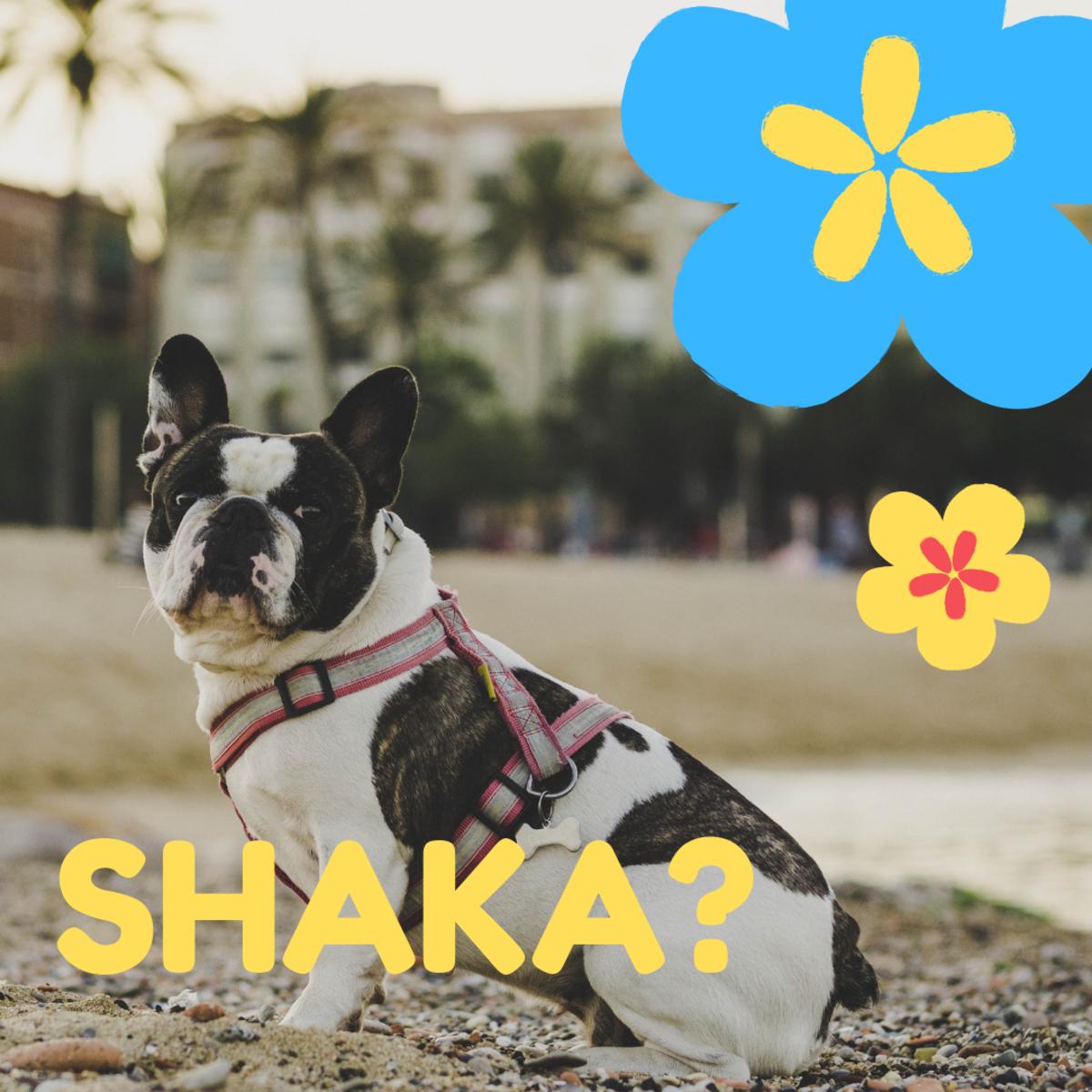 Is he a Shaka?