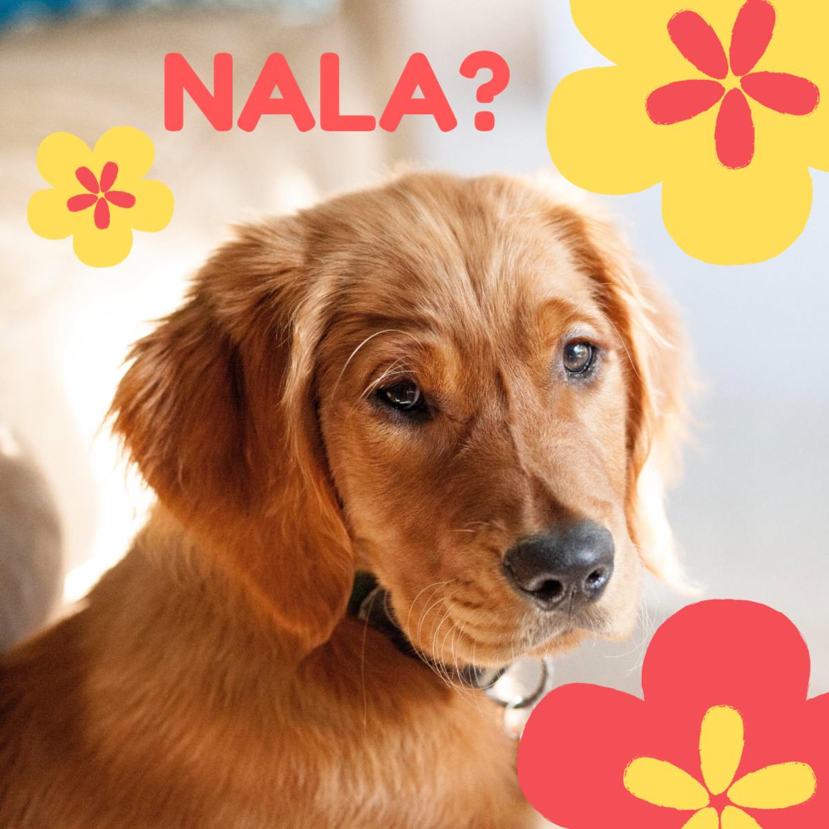 Is she a Nala?