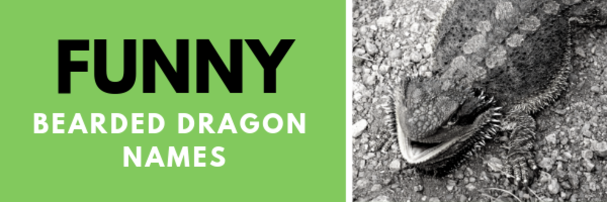 230+ Bearded Dragon Names for Your Rugged Reptile | PetHelpful