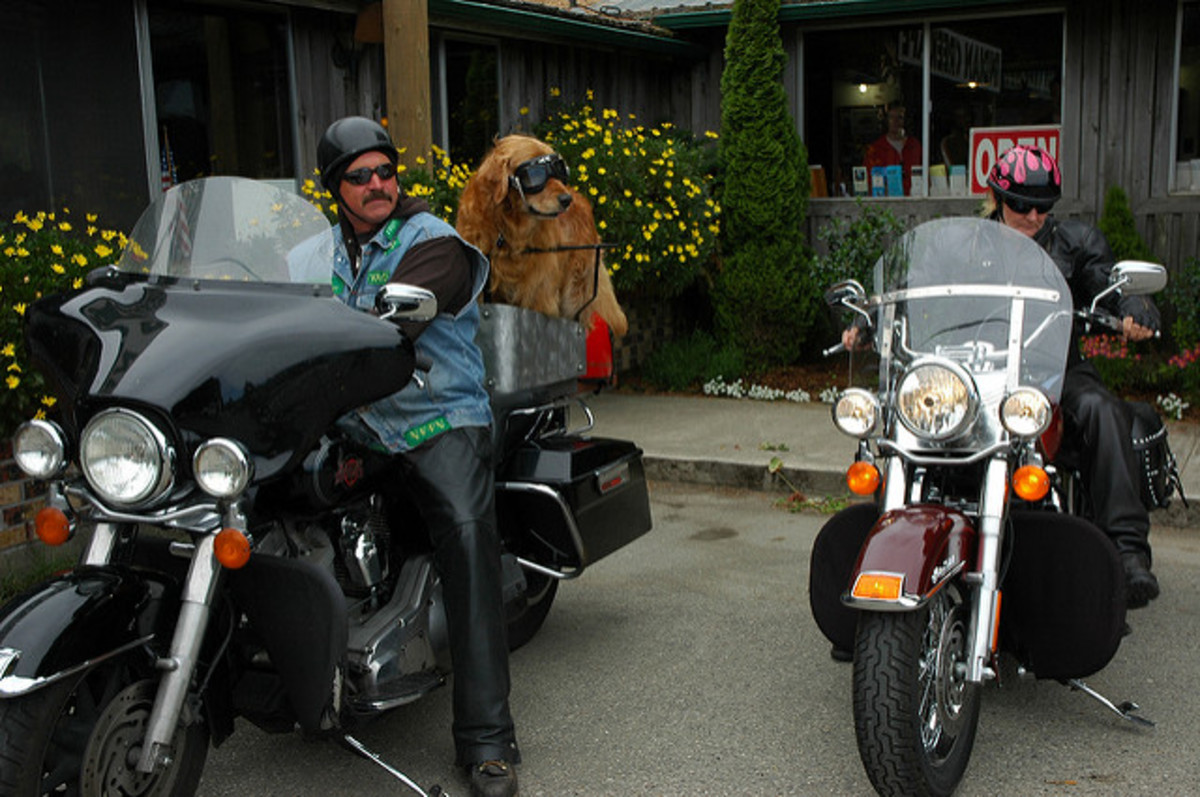 Riding your motorcycle with a larger dog can be difficult at times.