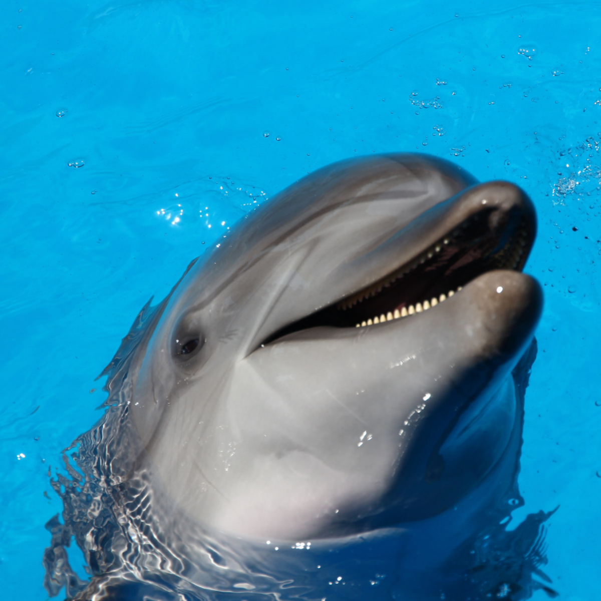 "What are dolphins really communicating when they ""smile""?"