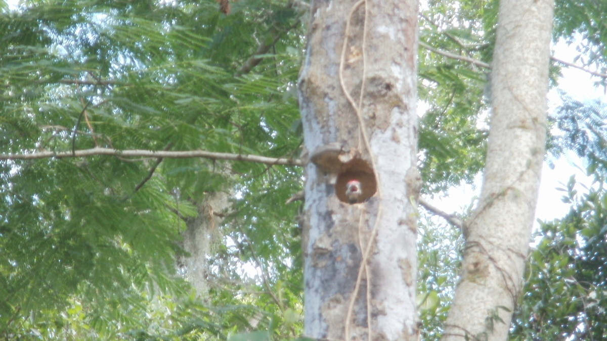 Bracket fungus over nest