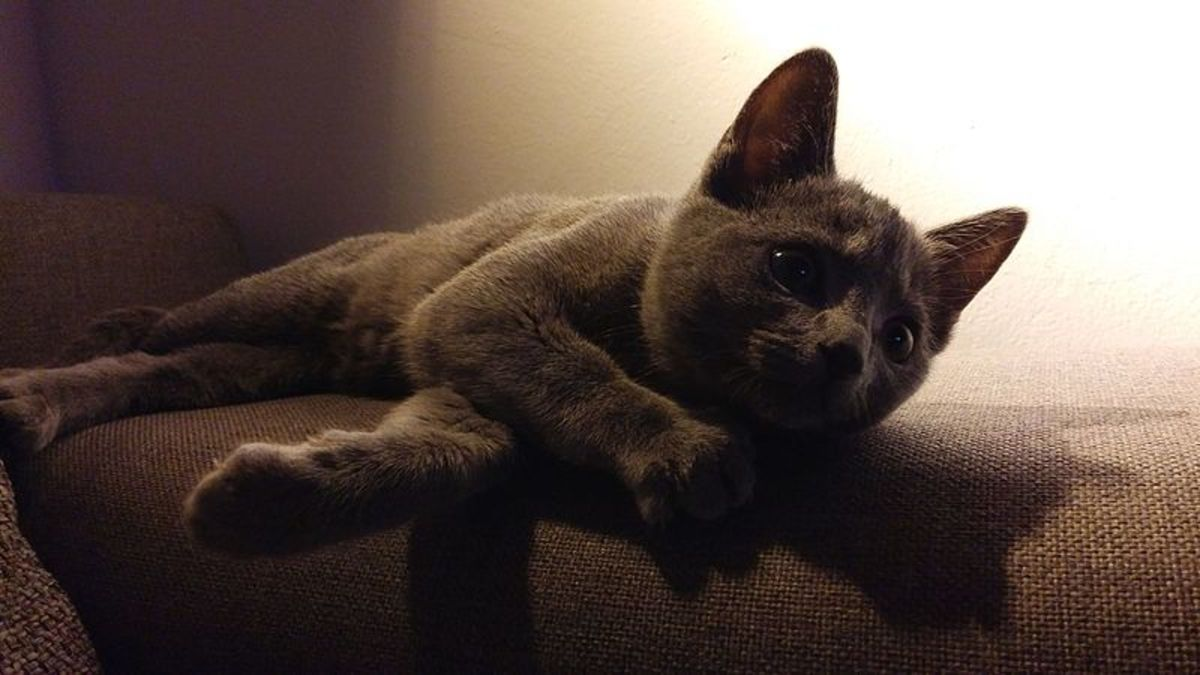 gray-blue-silver-and-lilac-cat-names