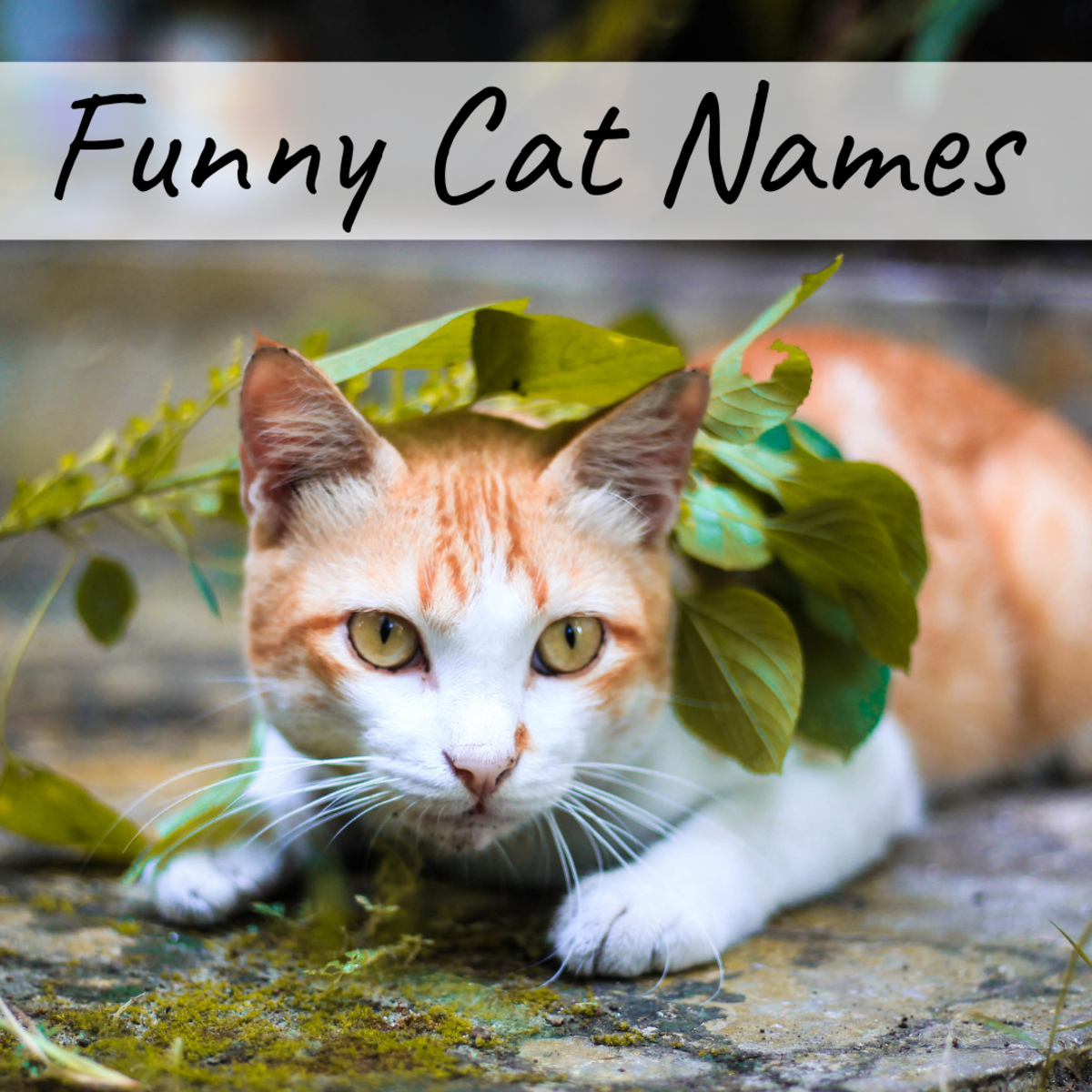 stupid cat names female