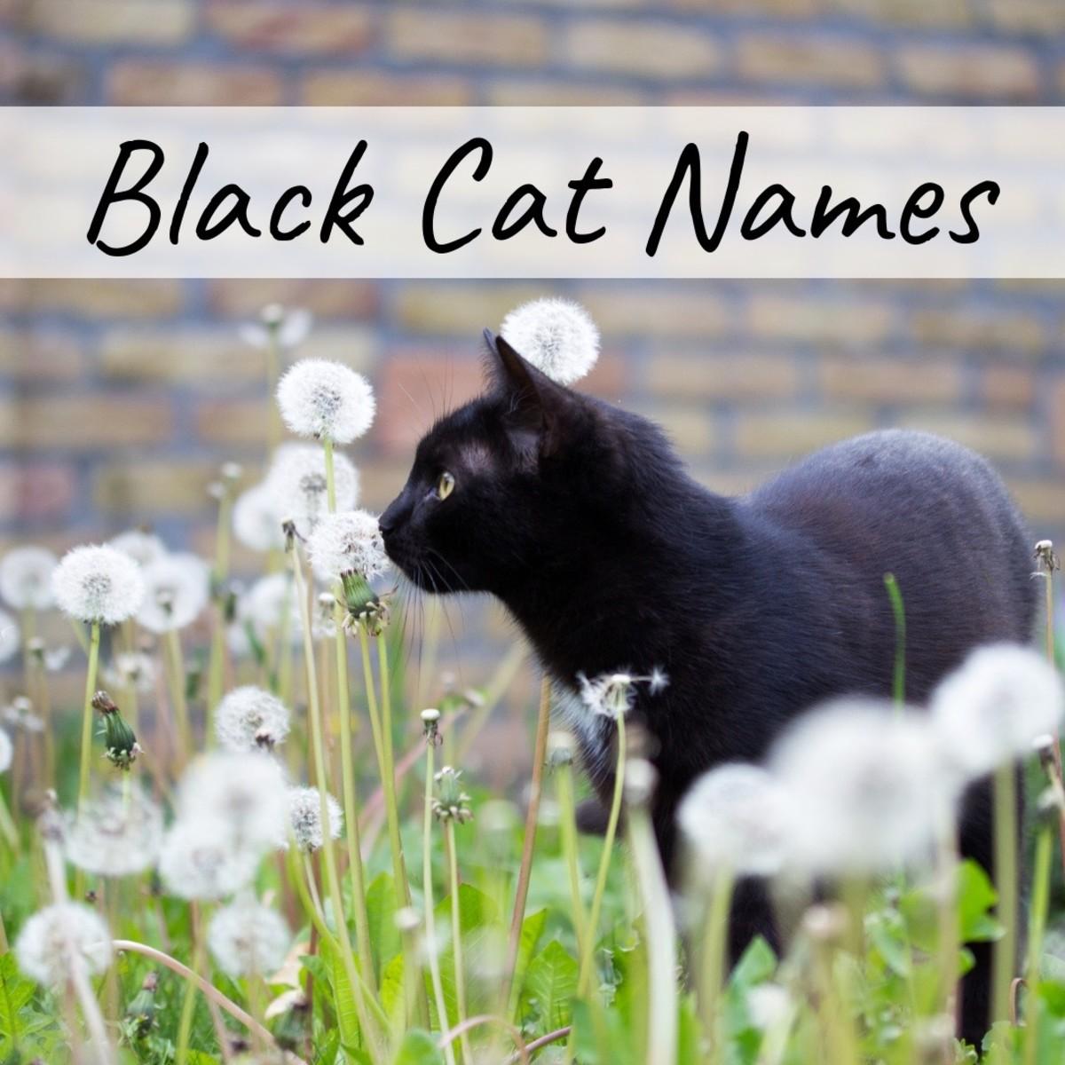 best-cat-names