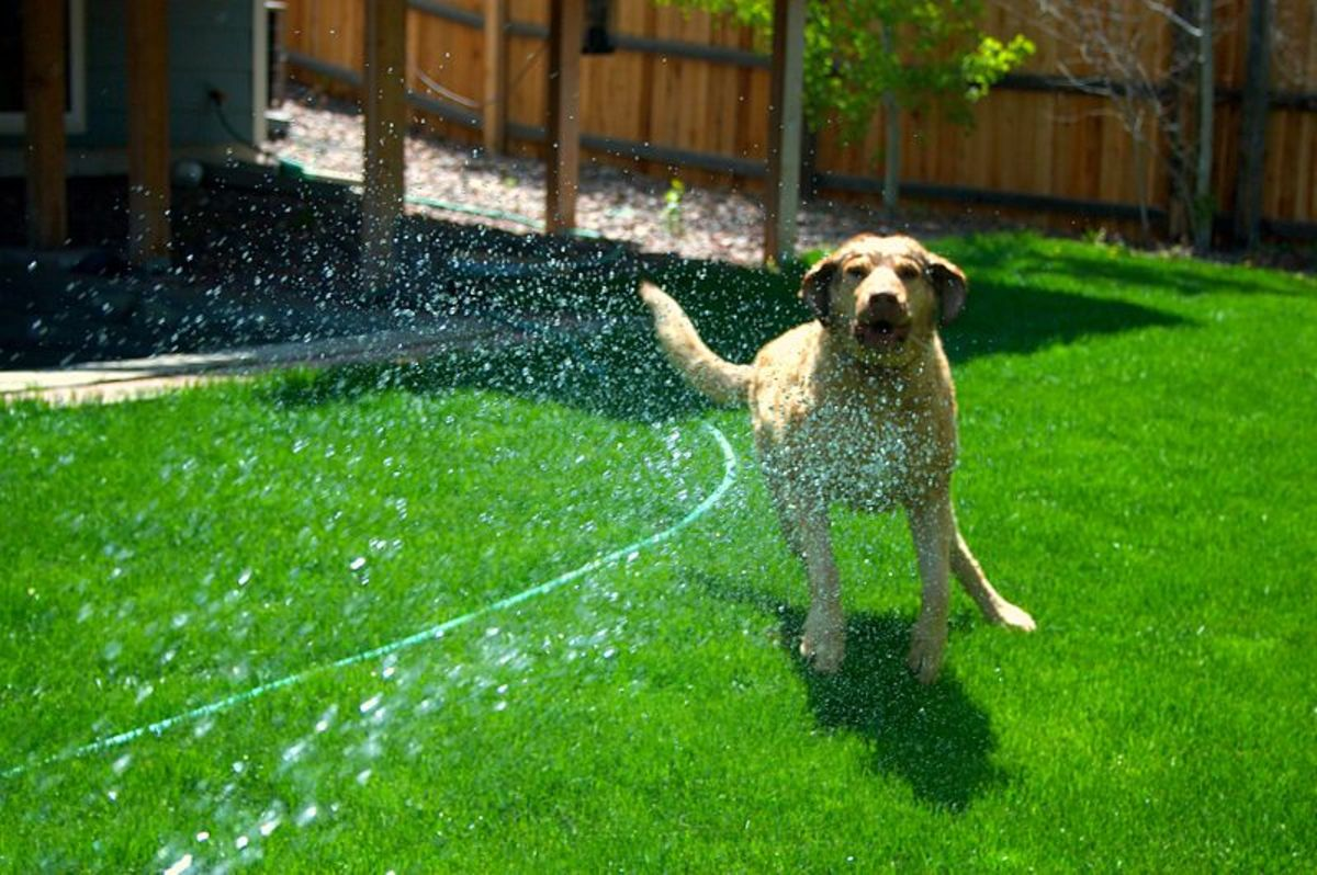 will-dog-pee-kill-grass-and-plants
