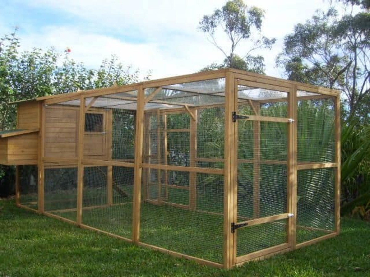 This is a great example of a chicken run with plenty of space.