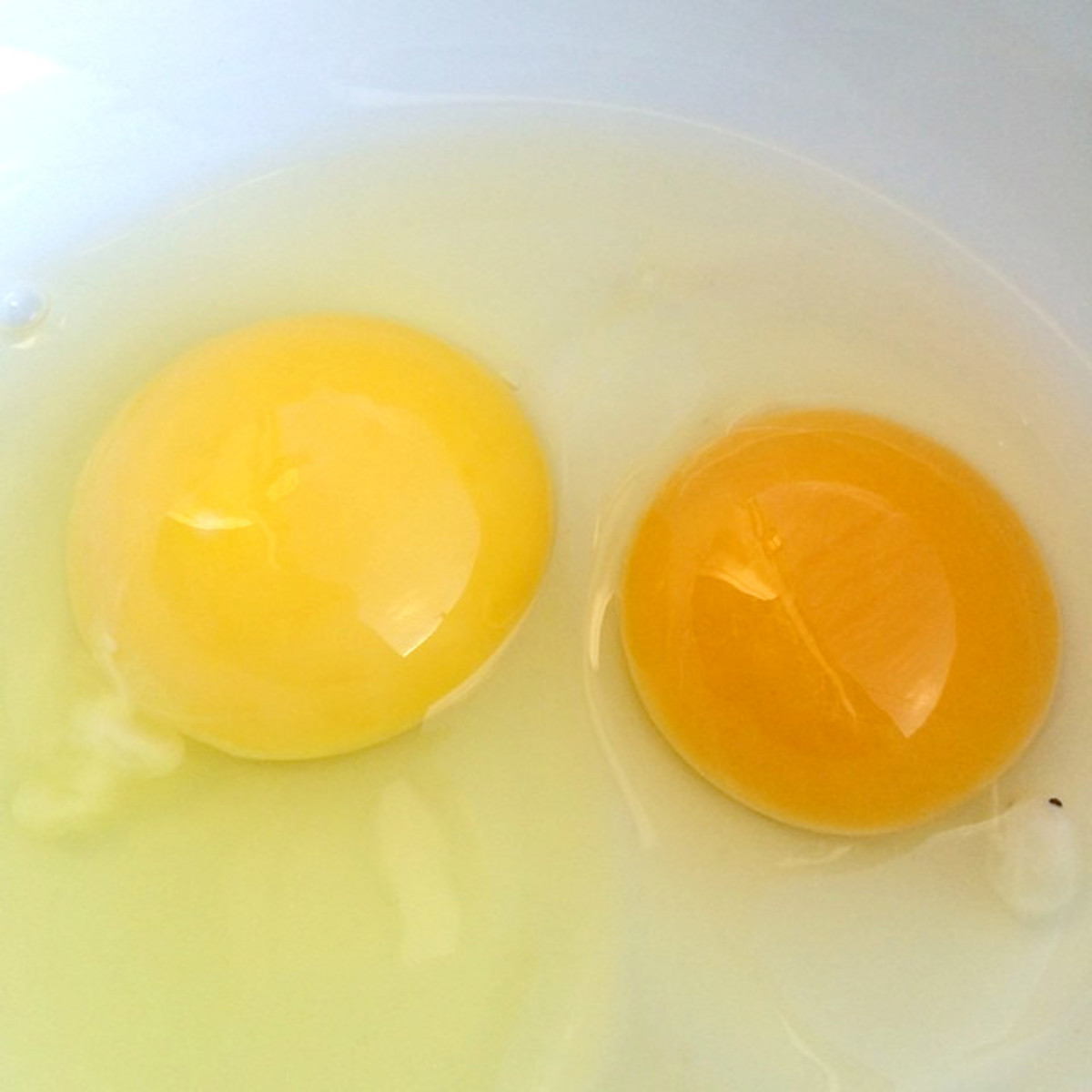 Caged egg yolk (left) vs. free-range egg yolk color (right).