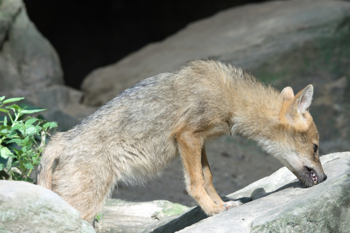 Not everyone has to worry about big predators like coyotes, but it is important to keep in mind that even a neighbors dog could be a potential threat to your hens.
