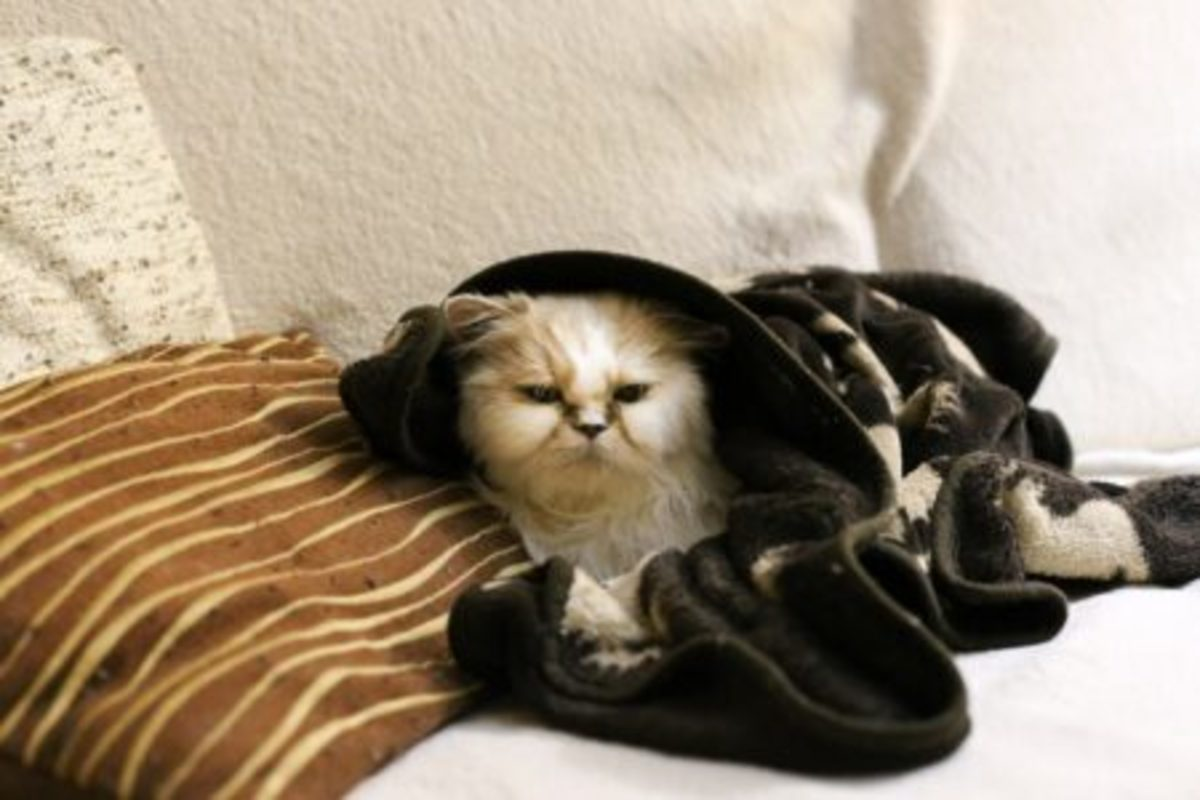 Yes, Mama, I'm warm now... no! no! no!… more covers!