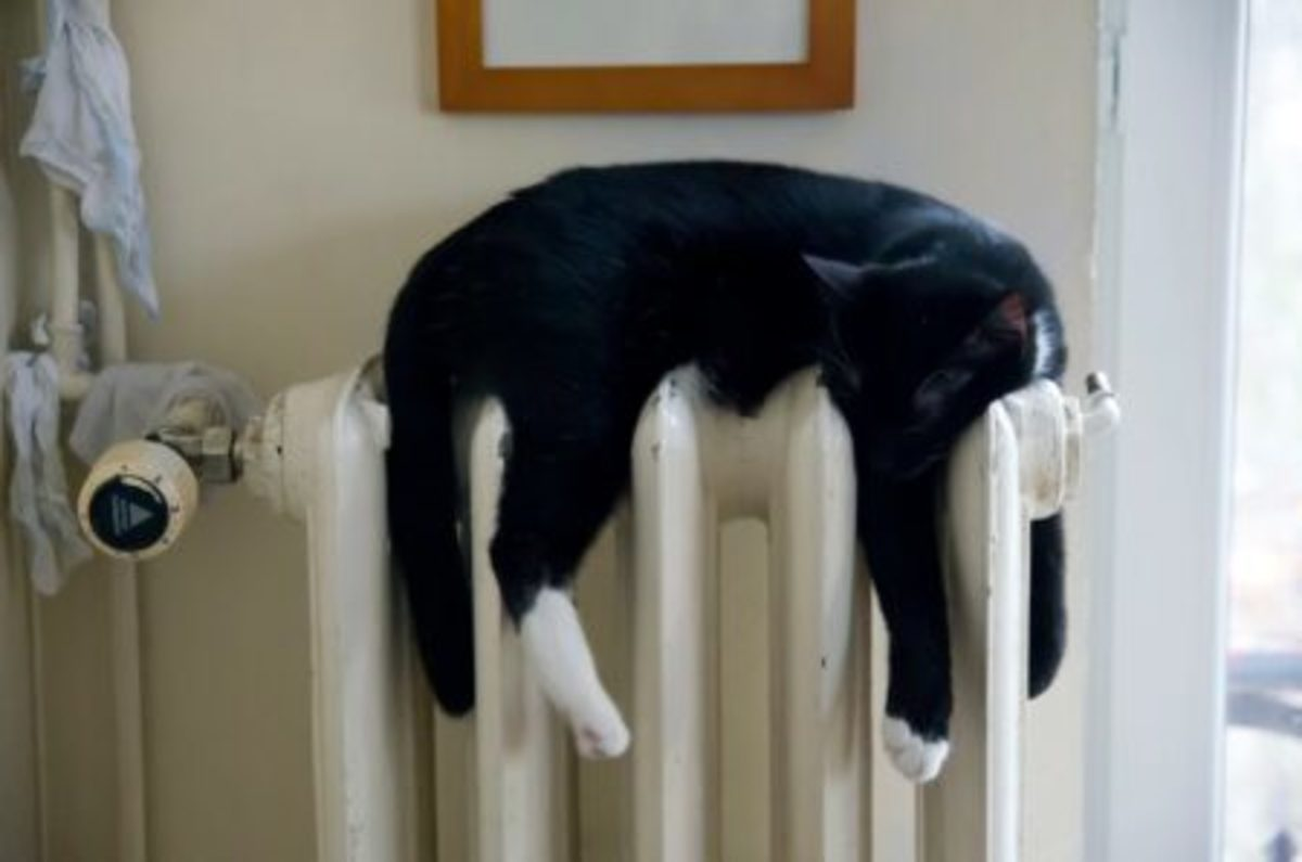 Aww yes... this is pawsome and oh so cozy... think I'll hang out here for a cat minute!