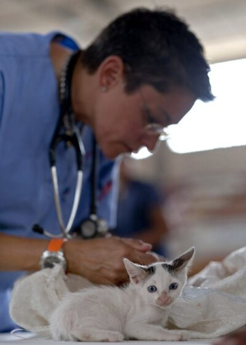 """""""Mama... I'm scared!"""" the vet says, """"It's o.k. little one... I'm here to help you!"""""""