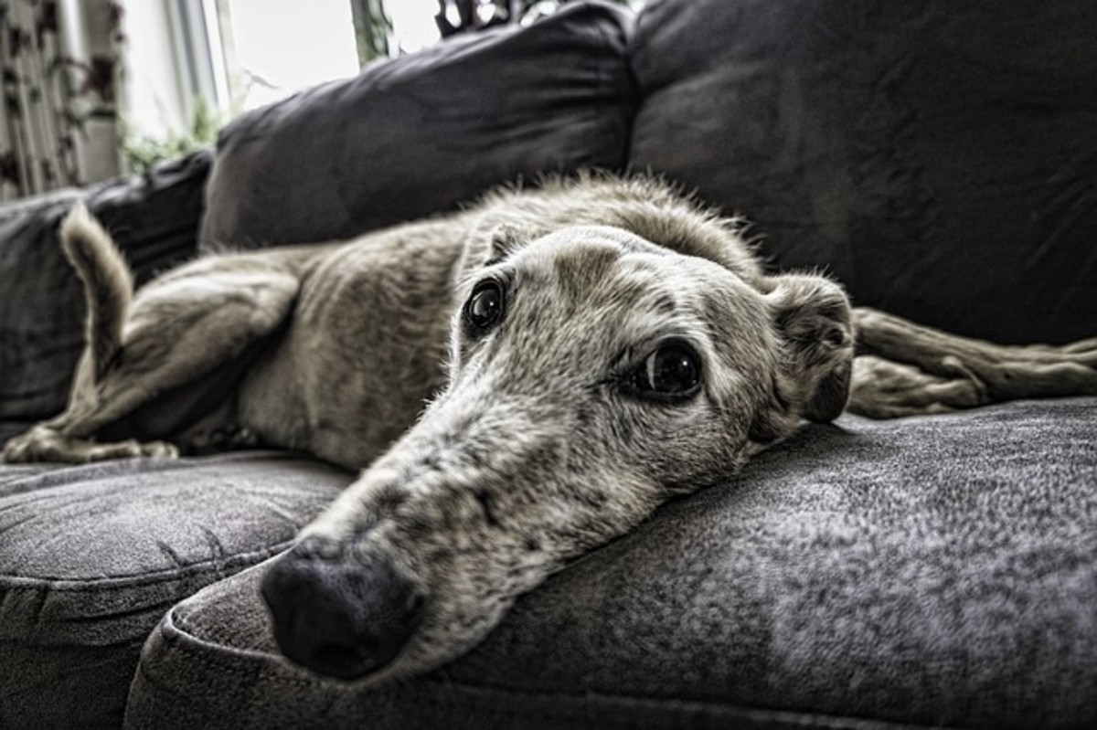 from-shelter-to-sofa-helping-your-rescue-dog-transition