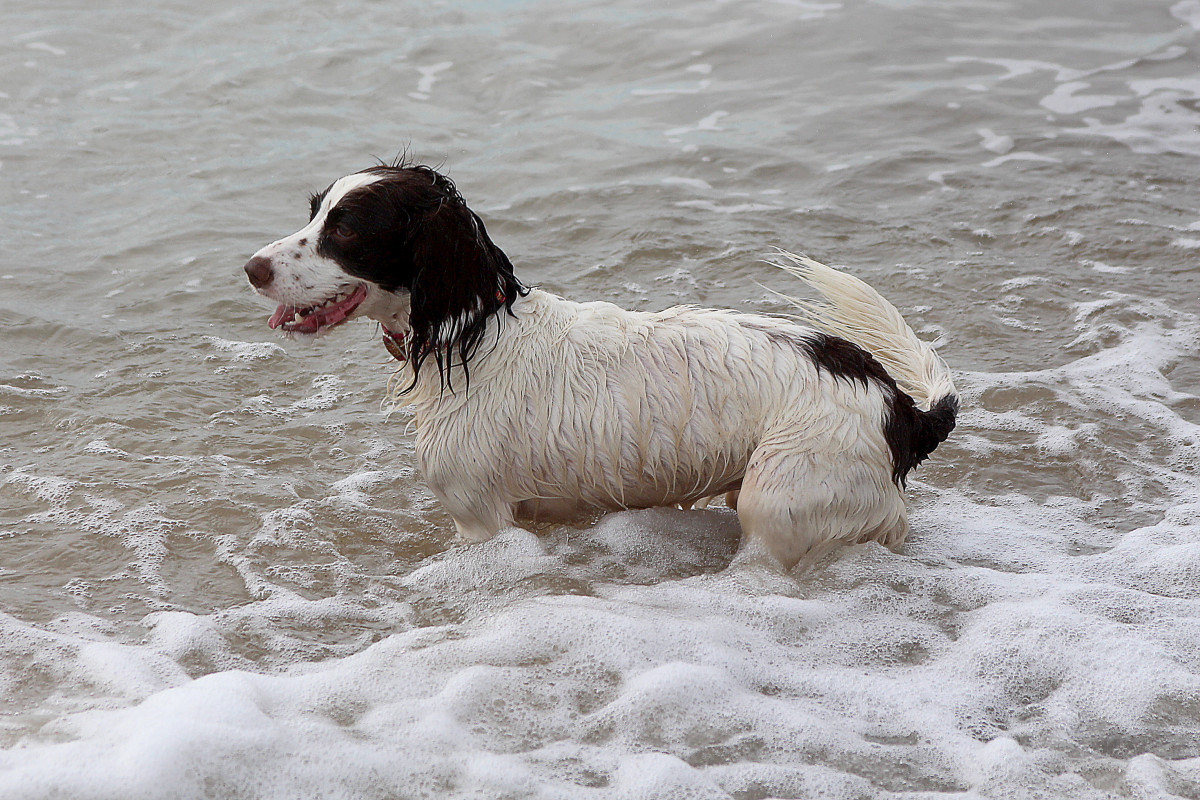 Swimming helps cool your dog, but remember to take breaks