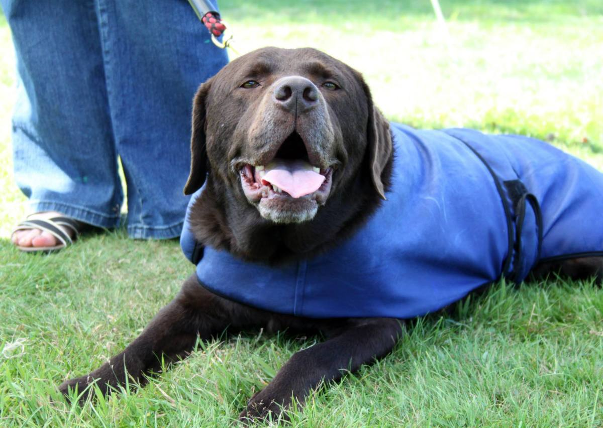 There is a lot of debate about the effectiveness of cooling coats