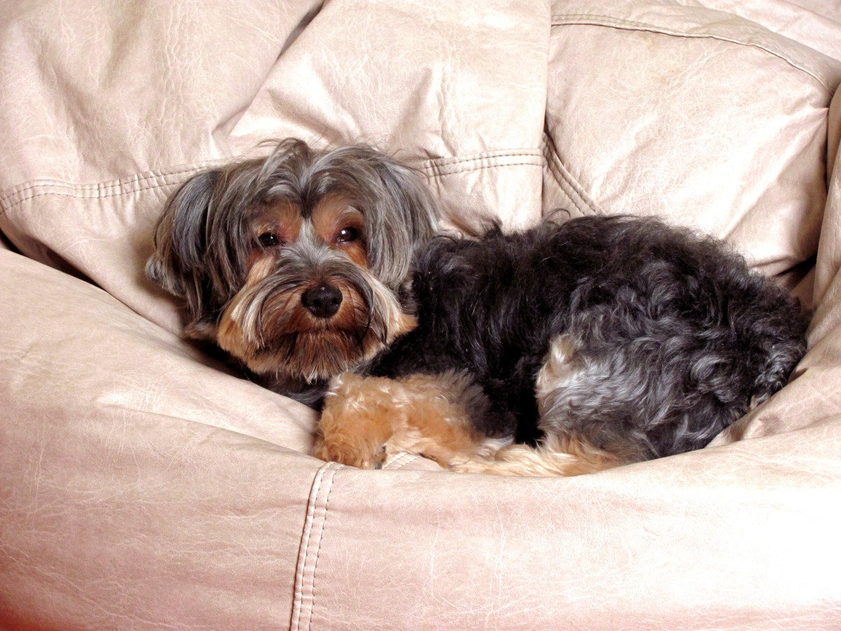 Names don't always suit our dogs, like calling a couch potato Speedy