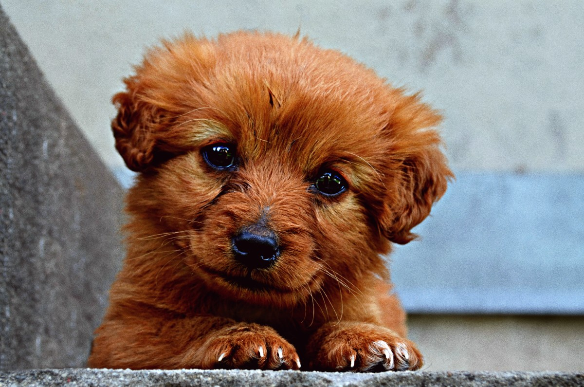 Celebrity names for your dog can soon lose their appeal