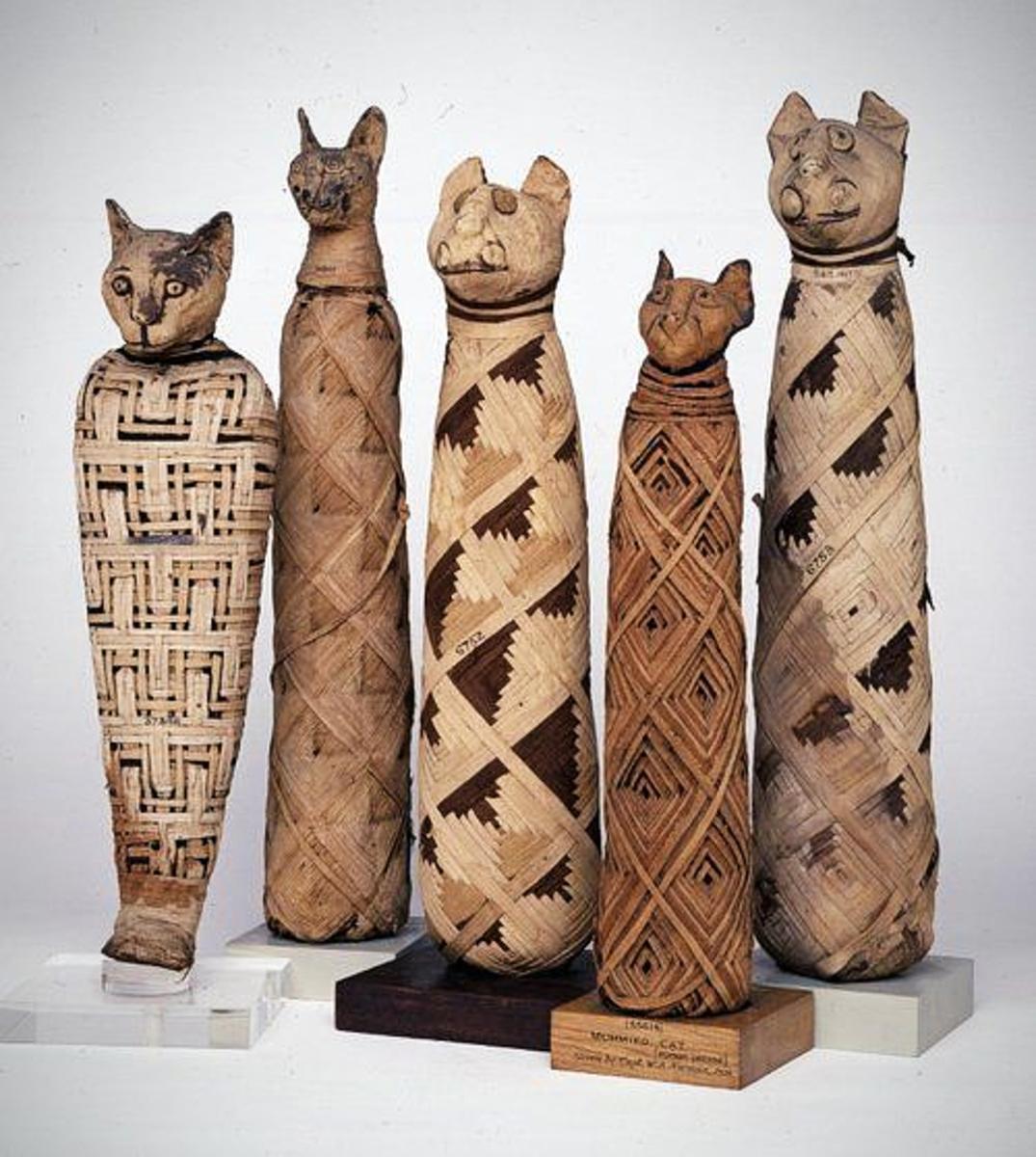 Ancient mummified cats