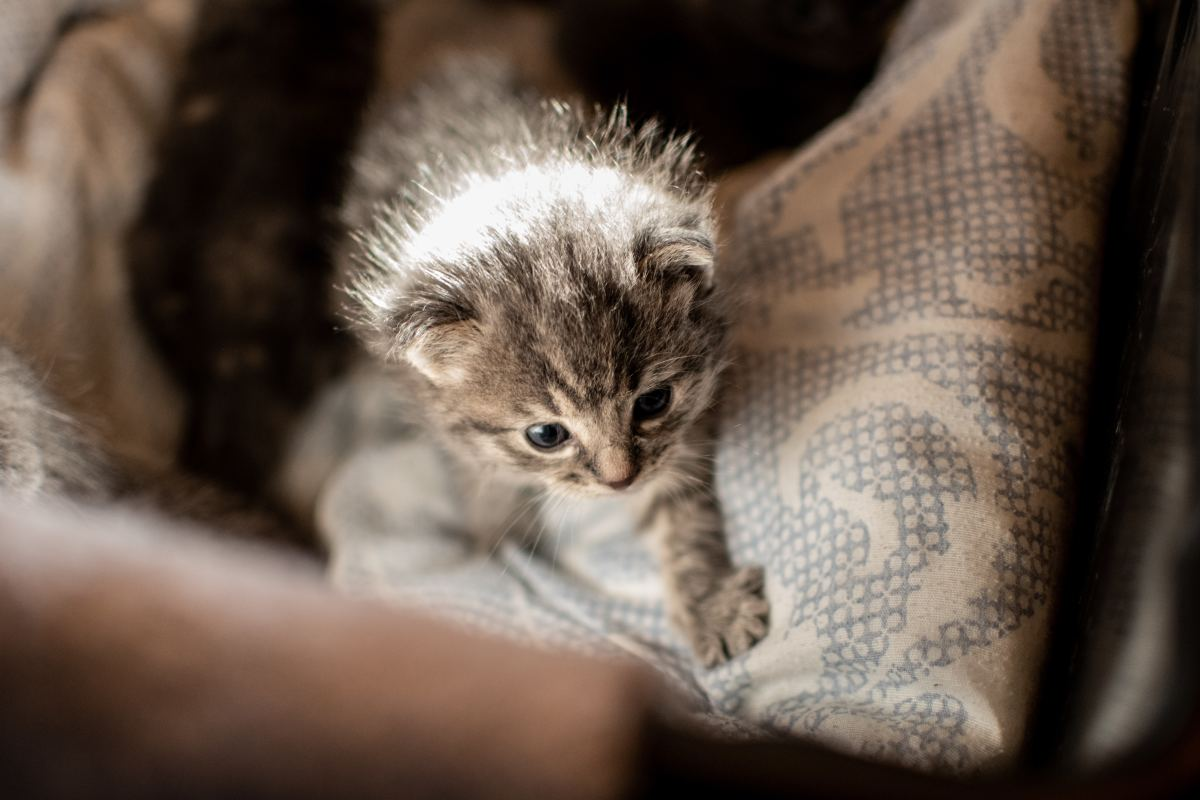 Mother cats eat tend to eat their kittens' feces for grooming purposes.
