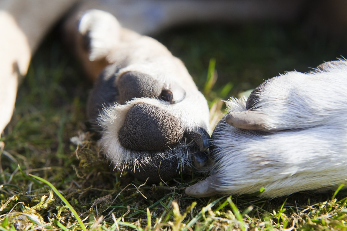 Hidden chemicals in our environment can result in damage to paws
