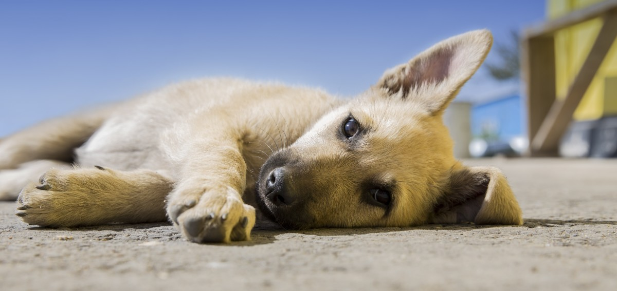 Why Is My Dog Licking His Paws All the Time? | PetHelpful