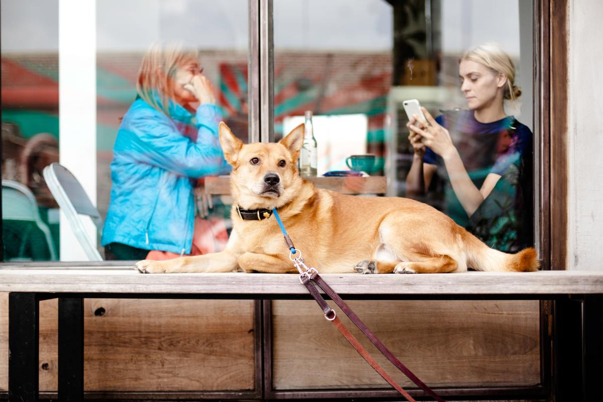 Dogs should not be left tied up in public places. If you can't keep your dog with you, leave them at home.