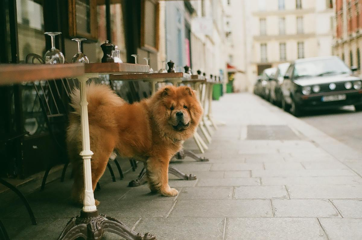 Unattended dogs are easy targets for thieves