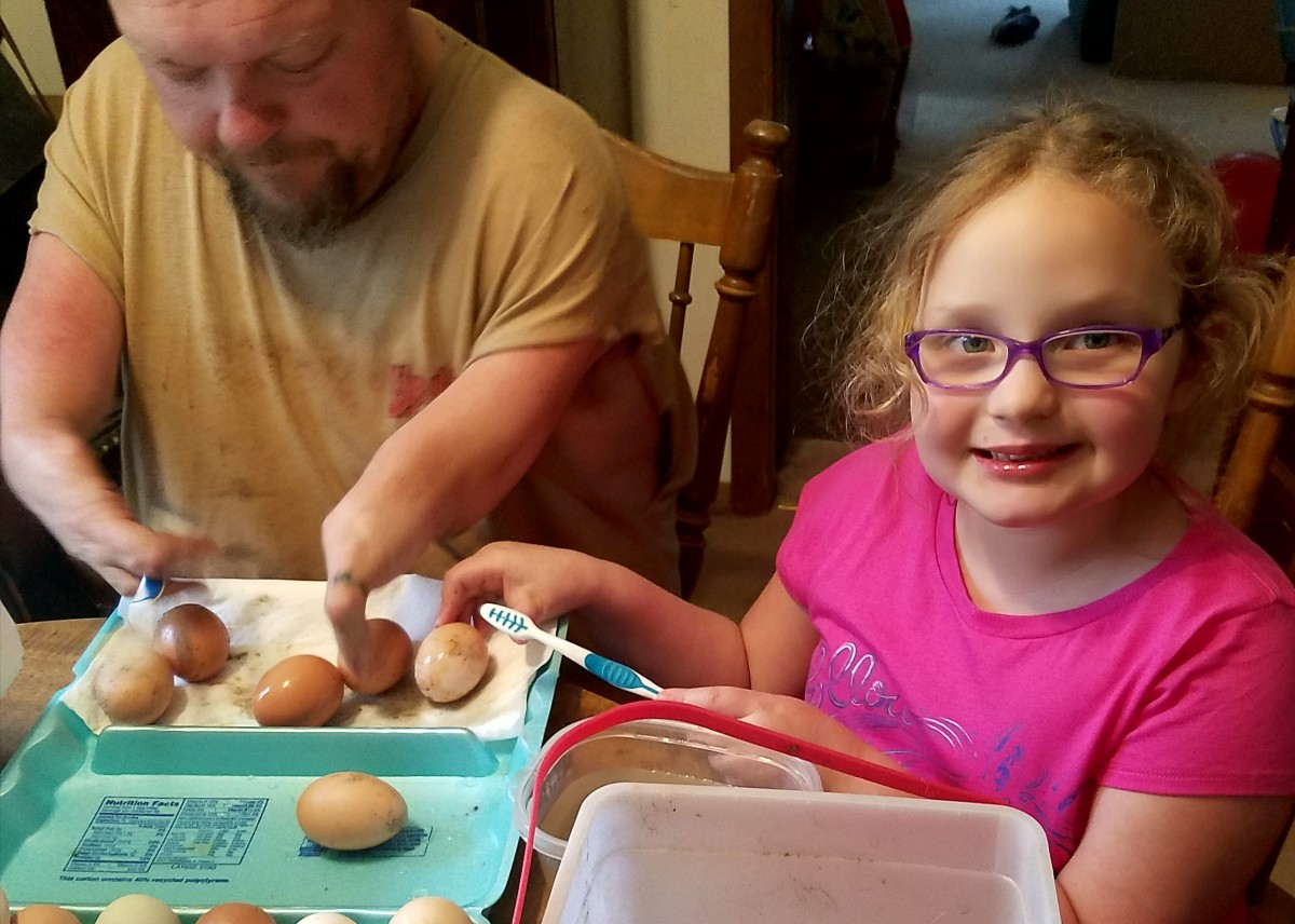 Kenny and Willow cleaning eggs to be incubated