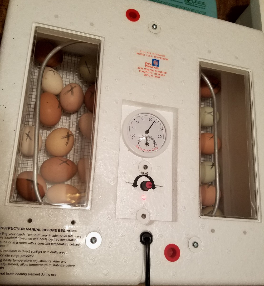 Eggs cleaned, marked and placed in the incubator
