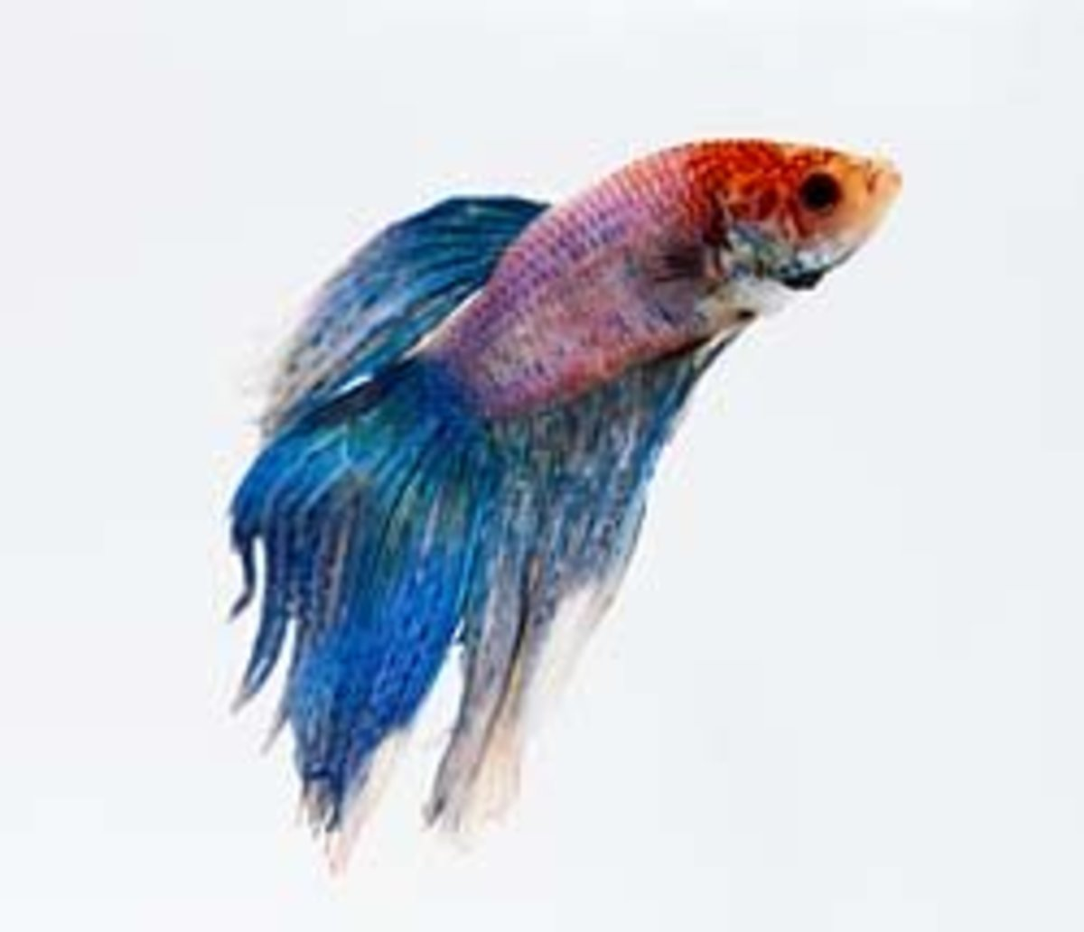 Some fish are mostly idiot proof, like the Betta