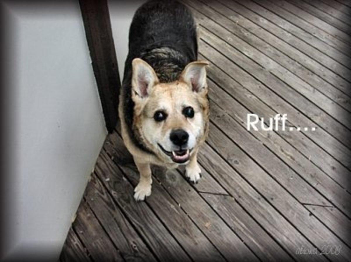 Blind Dog's Ruff