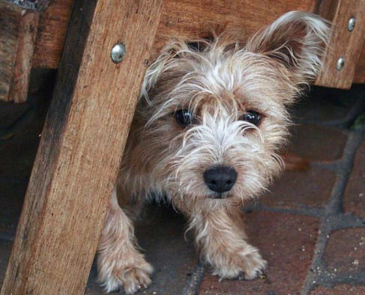 dog_fears_and_phobias
