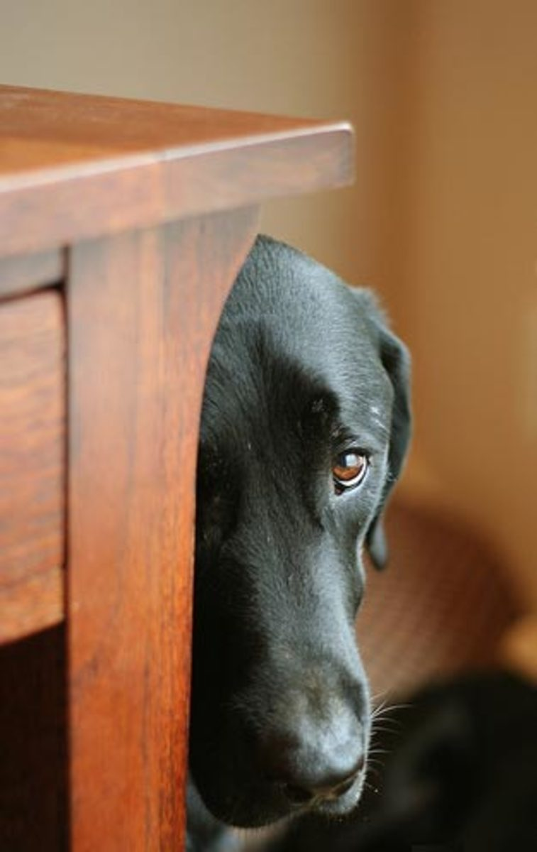 How to Help Your Dog With Fears and Phobias