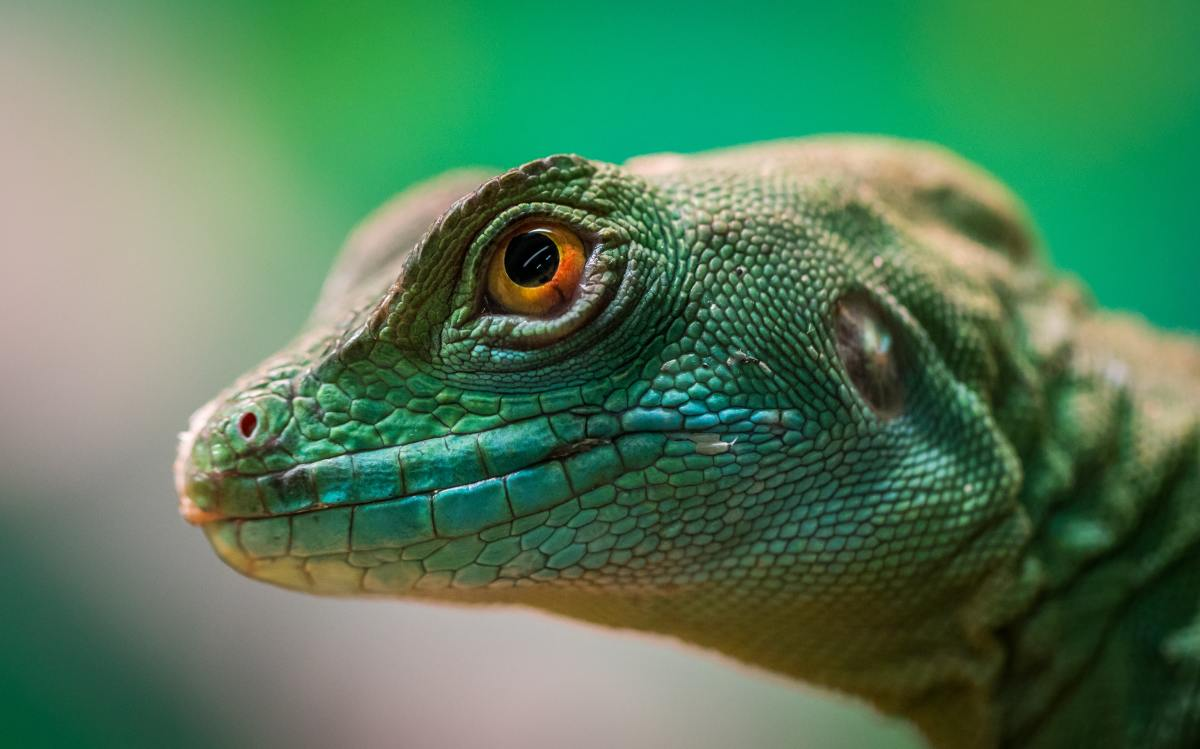 Reptiles don't eliminate very often, so keeping them as pets isn't as messy as you'd think.