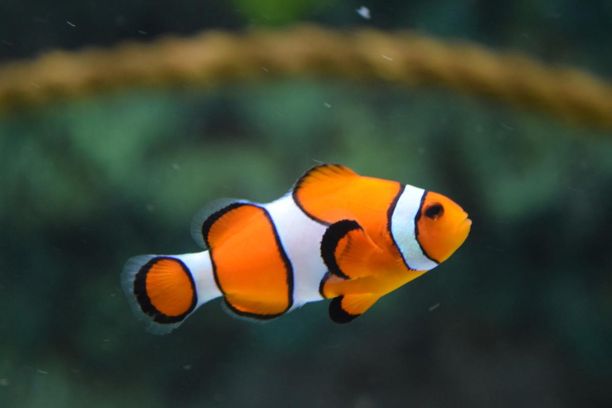 Fish consider all water to be a restroom.