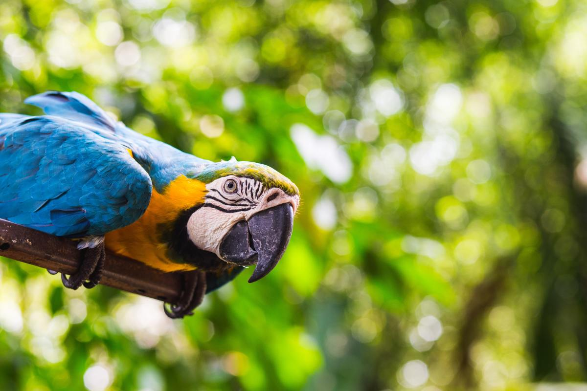 Larger birds, like parrots, are able to understand commands fairly easily.